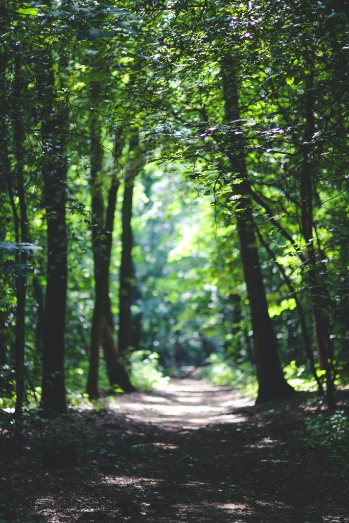 senderos en los bosques que ofrecen espacios de calma interior