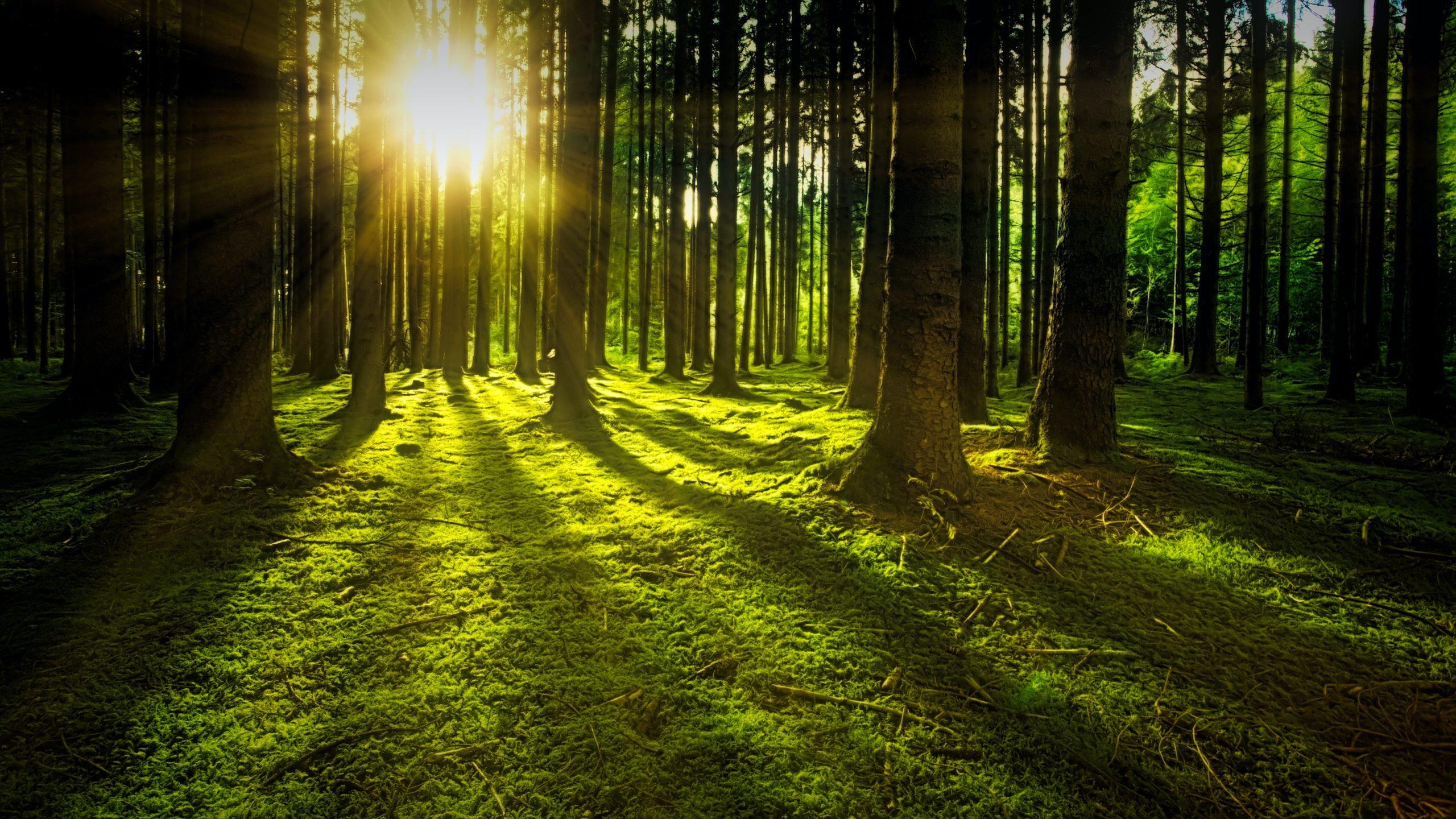 imatge bany de bosc Natura Conscient