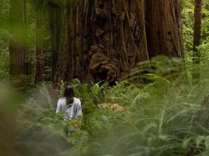 estudis banys de bosc