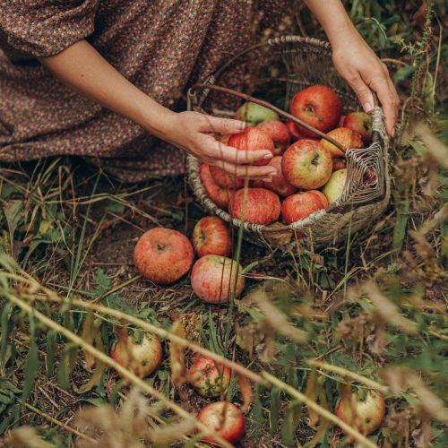 El ciclo de la Naturaleza Mujer recogiendo frutas de temporada