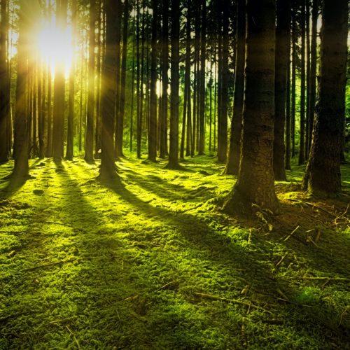 la naturaleza como vía para desarrollar mayor autoconocimiento